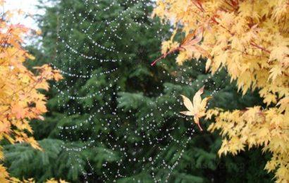Осень (Fall)
