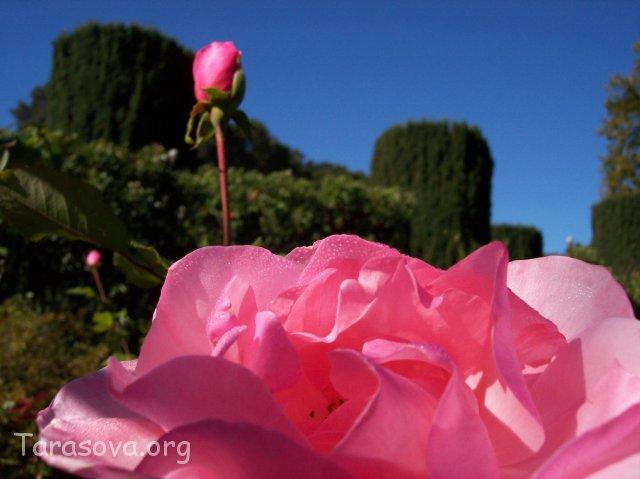 Цветы (Flowers)