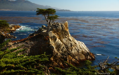 Одинокий Кипарис и Санта-Круз   (The Lone Cypress and Santa Cruz)