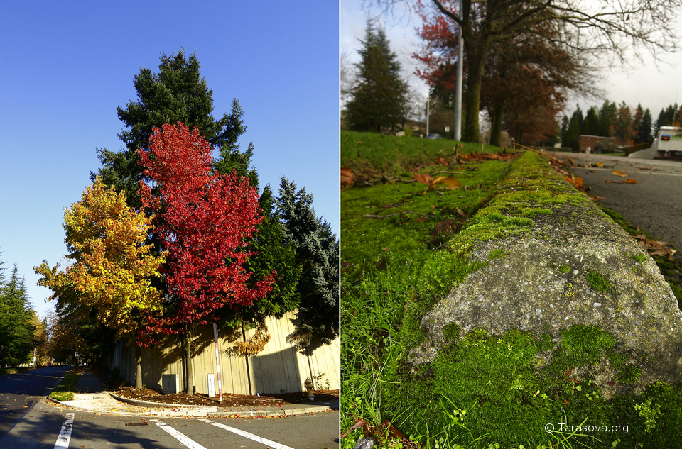 Осень может украсить даже обыкновенную улицу
