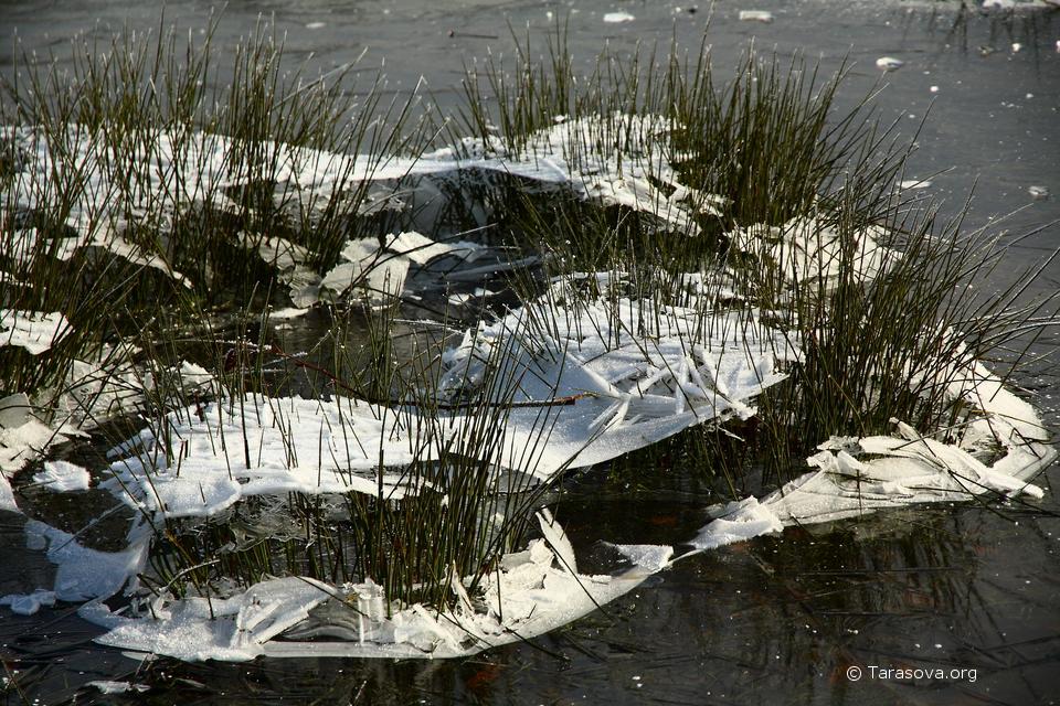 Зимой, нечастые морозы сковывают льдом городские водоемы
